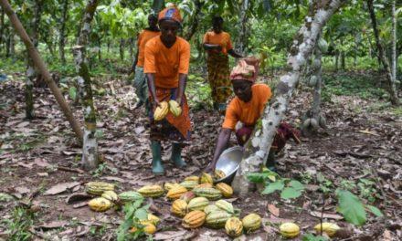 La Côte d'Ivoire, premier producteur mondial de cacao, se convertit au commerce équitable