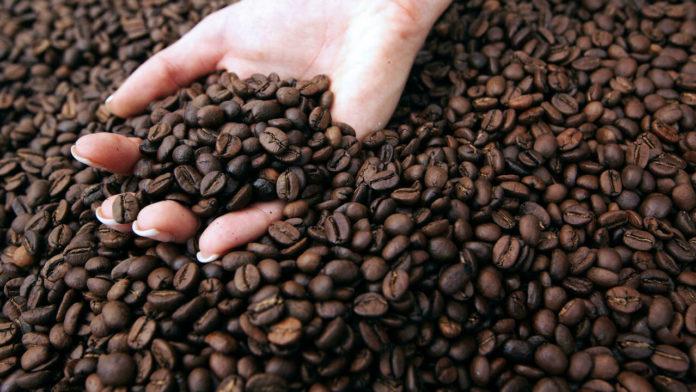 Sur cette photo d'archive prise le 27 juin 2013, une personne tient des grains de café lors de l'exposition