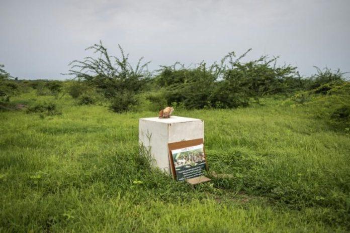 """La première pierre posée pour inaugurer les travaux de la ville futuriste """"Akon City"""", projet du chanteur sénégalo-américain Akon, à Mbodiene le 30 août 2021 afp.com - JOHN WESSELS"""